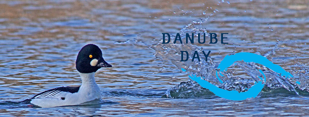 Danube Day  - Internationaler Donautag 2018