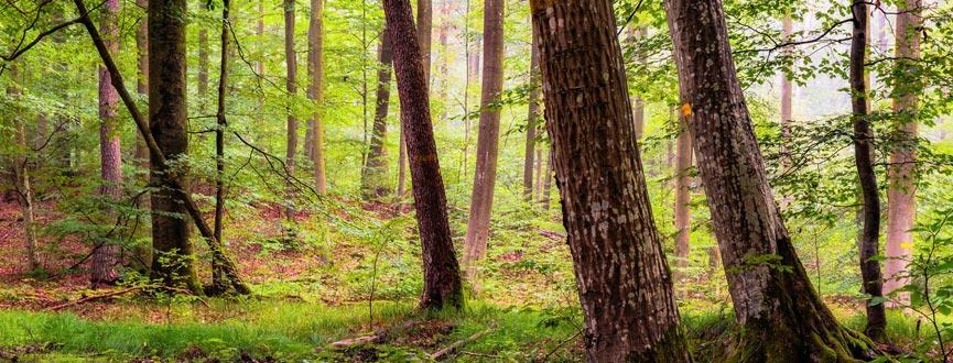Um den Steigerwald auch für künftige Generationen zu erhalten und gleichzeitig die Interessen vor Ort umfassend zu berücksichtigen, soll ein besserer Schutz entwickelt werden – mit den Menschen in der Region.